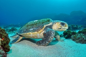 Diving-with-Sundive-in-Byron-Bay
