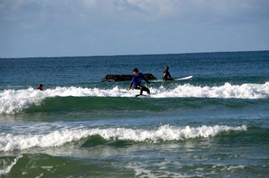 Let's Go Surfing 044