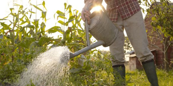 gallery-1457538044-gardening