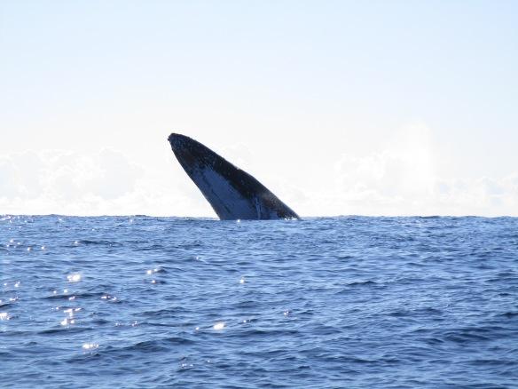 Azazing whale